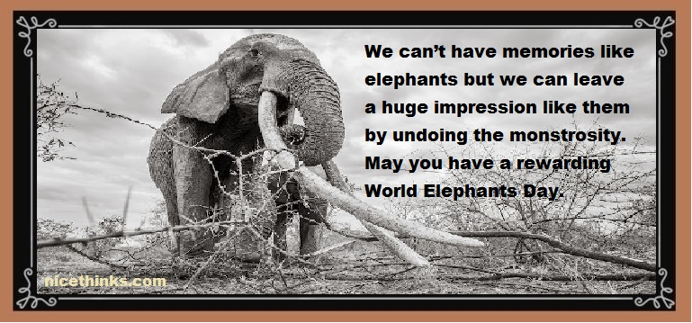 World Elephant Day Messages