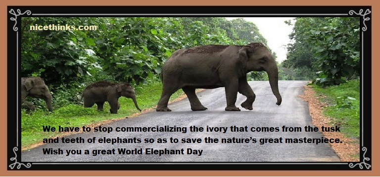 World Elephant Day Quotes & Wishes
