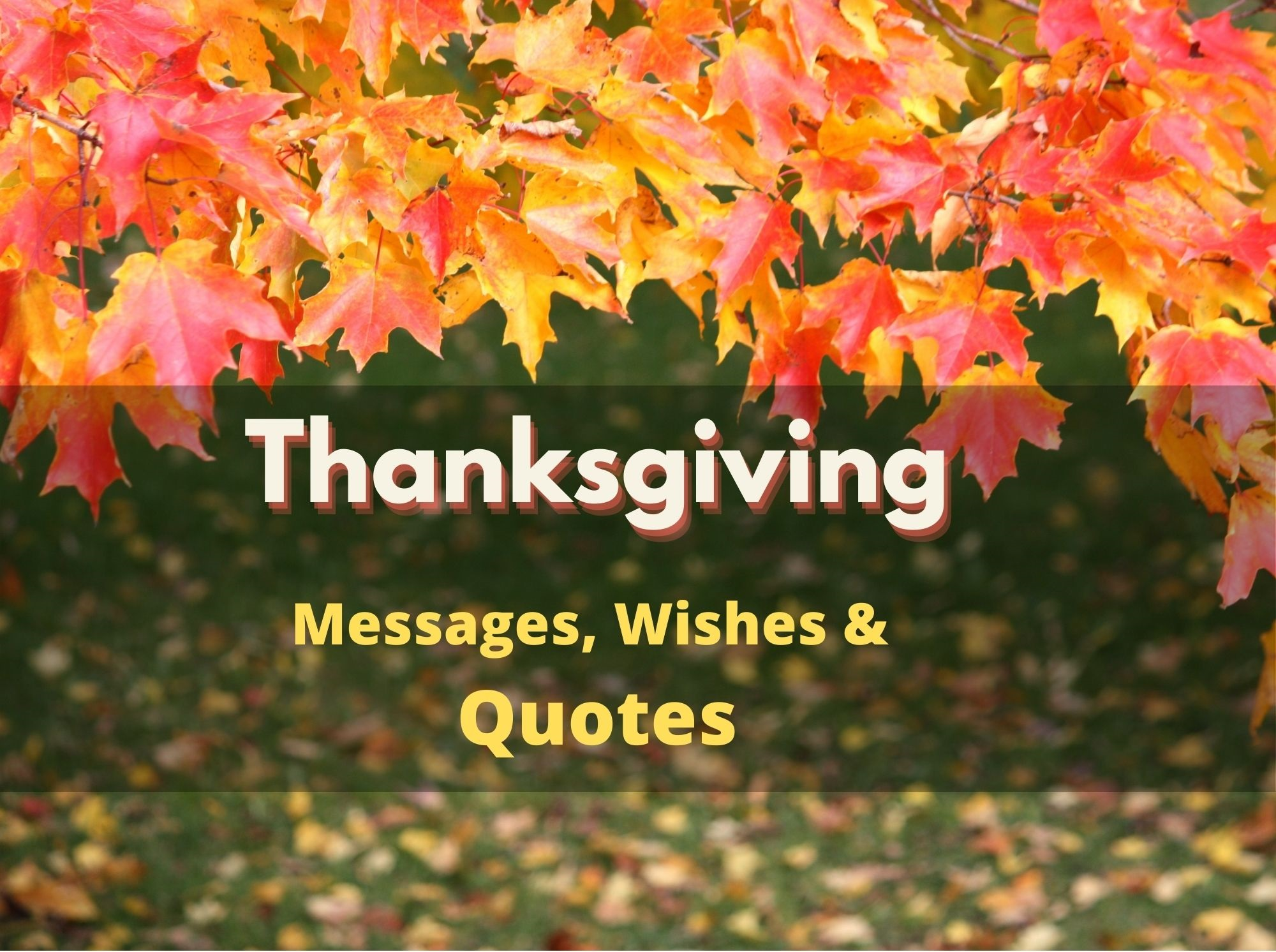 Thanksgiving Messages, Wishes & Quotes