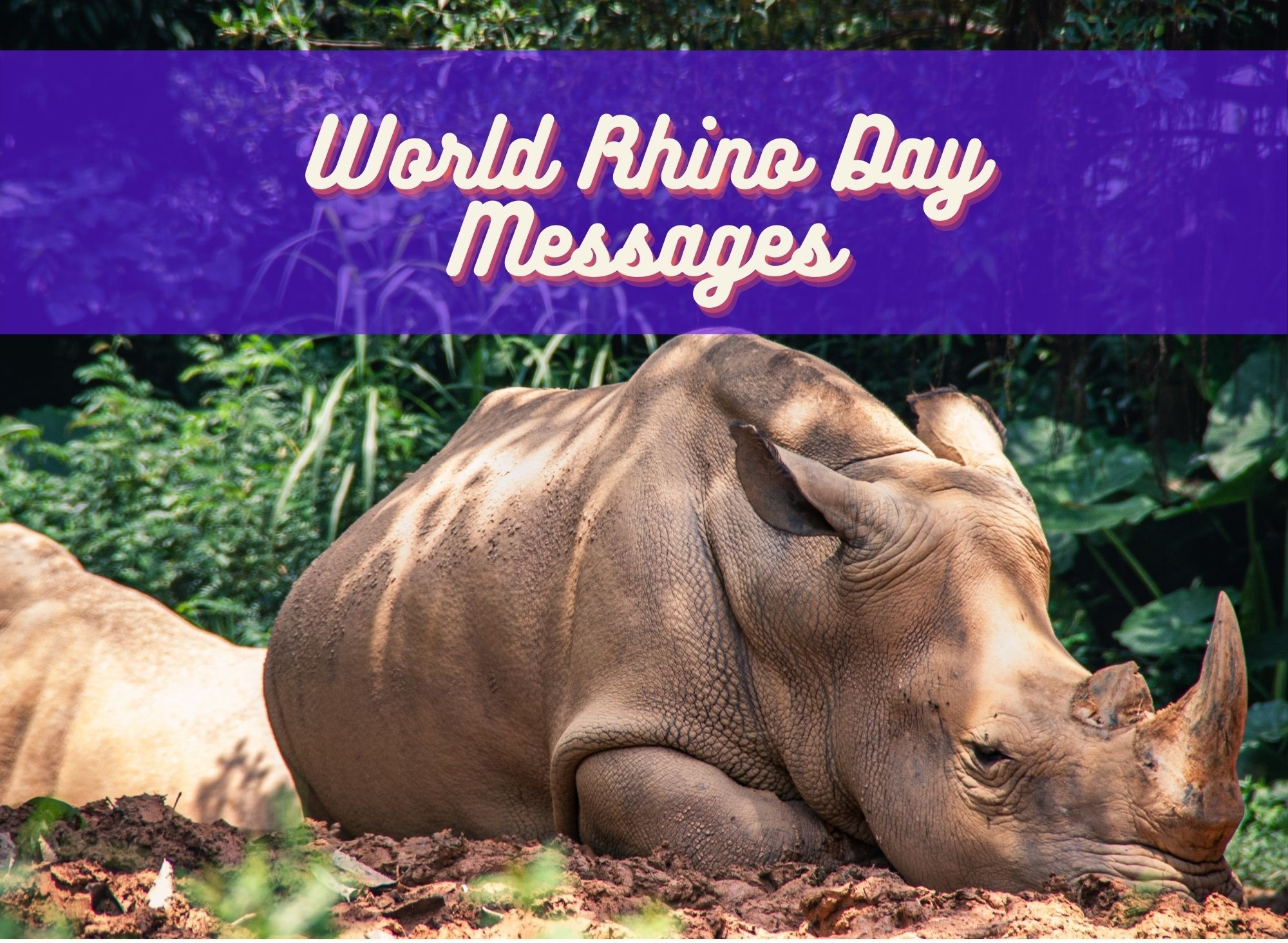 World Rhino Day Messages