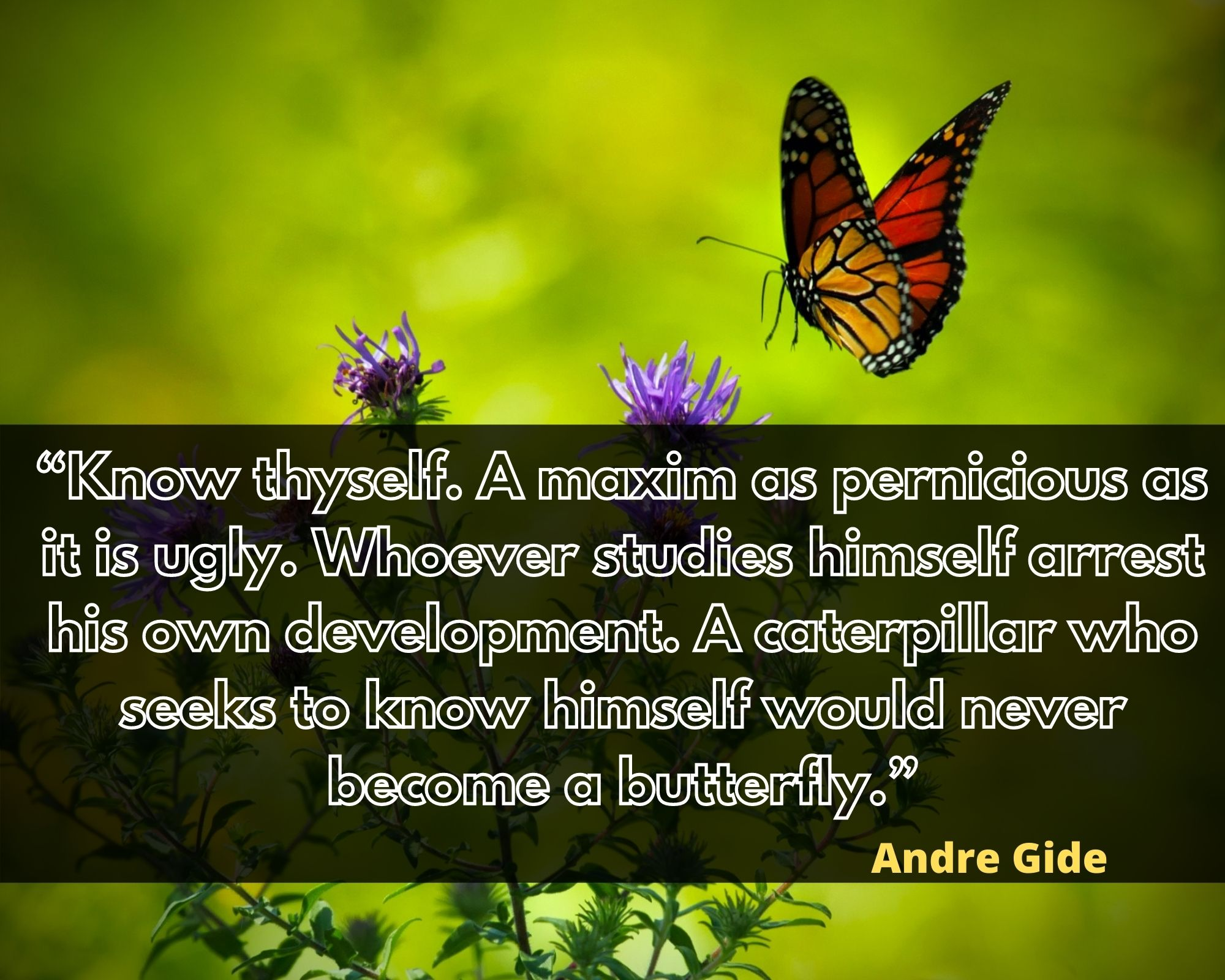 sayings about butterflies