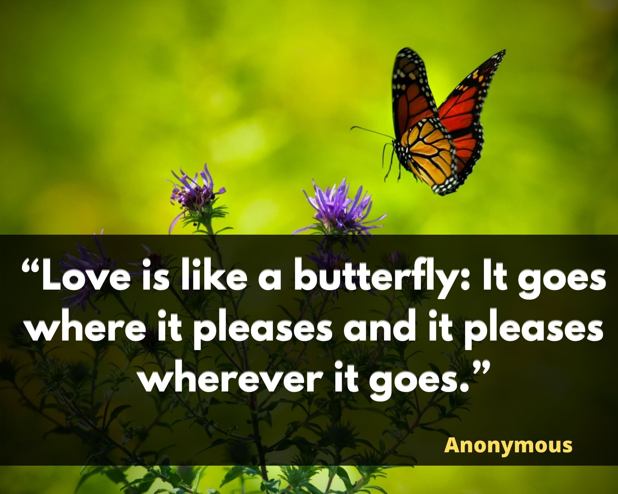 quotations on butterfly
