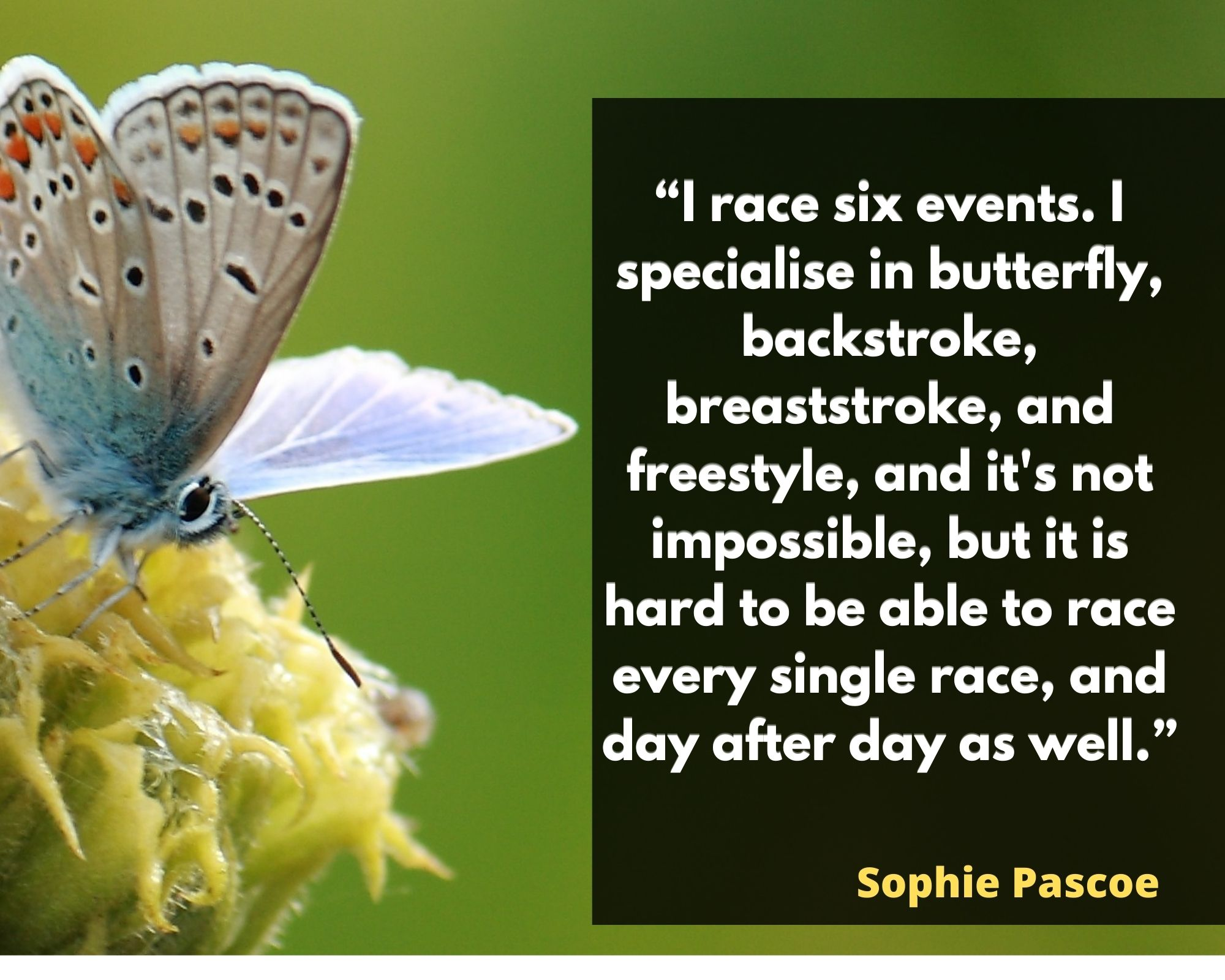 quotes about butterflies