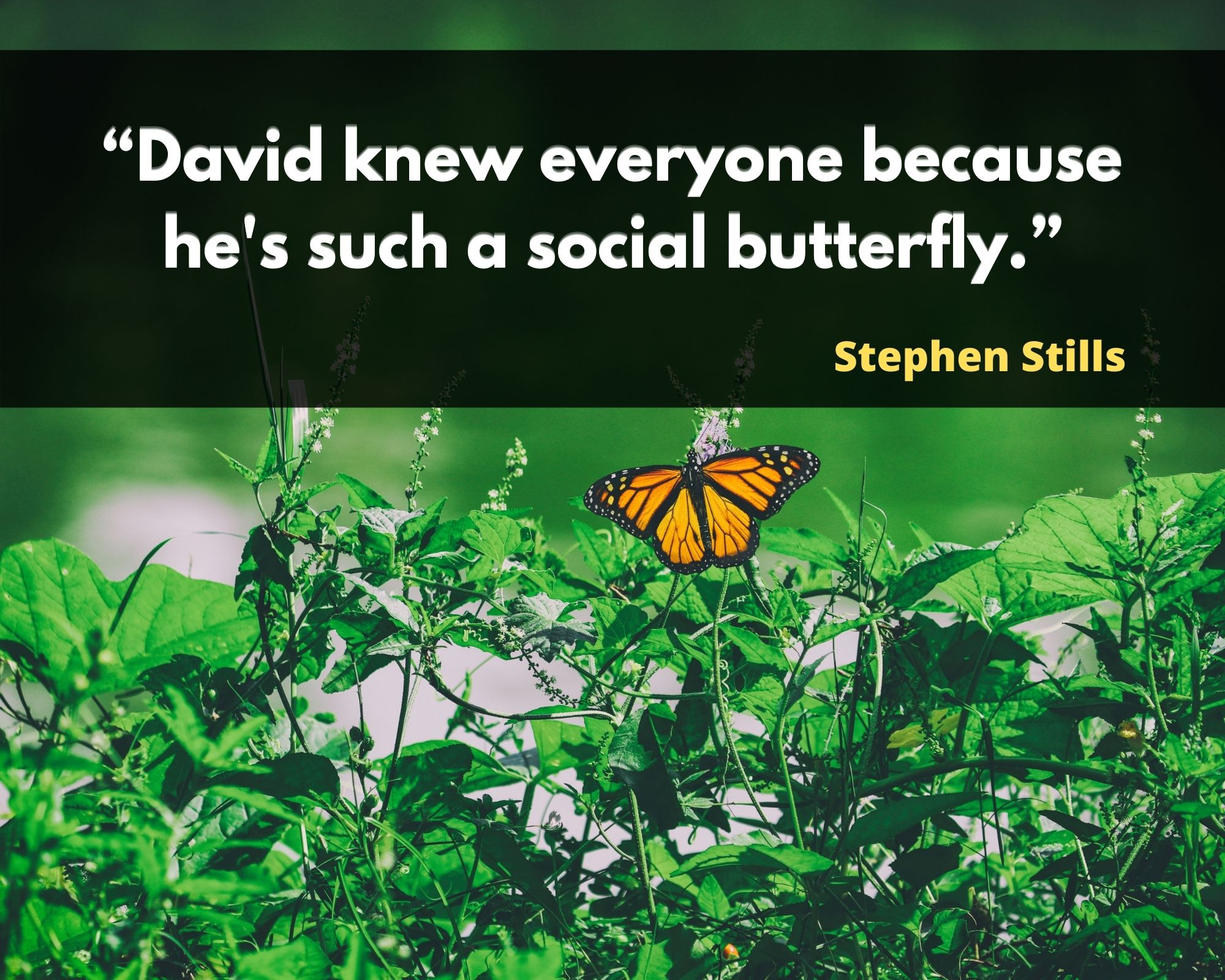 butterfly love quotes