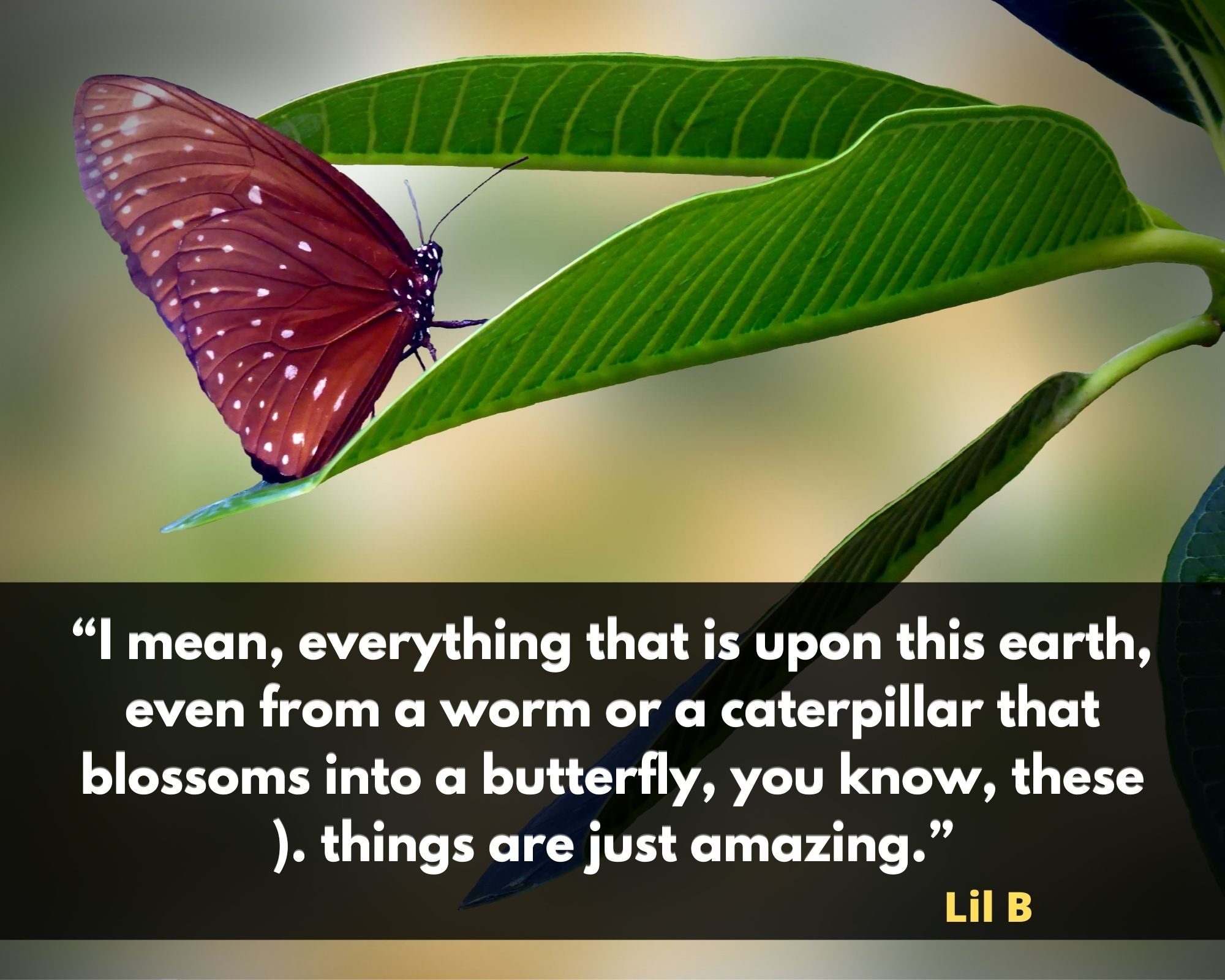 beautiful butterfly quote