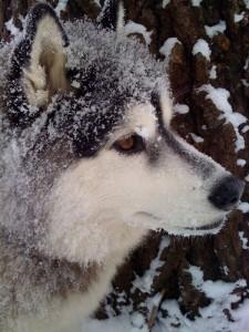 Handsome snow guy :)