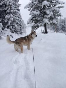 His 1st snow! 1/30/14