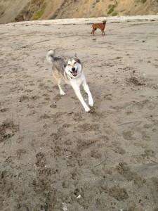 1st beach visit at Mavericks! 2/14