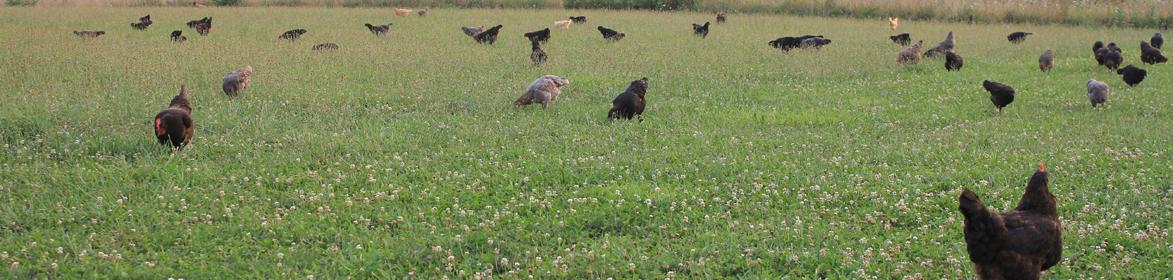 Loudounberry Farm & Garden Header