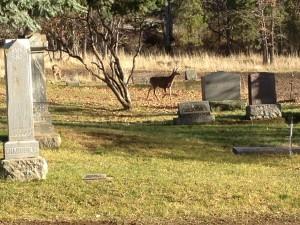 Grave Side Visitor