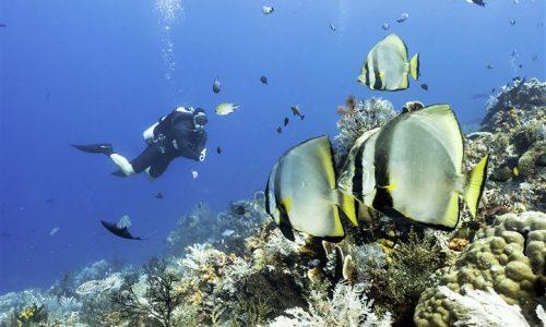 Kelapavillas-facilities-diving