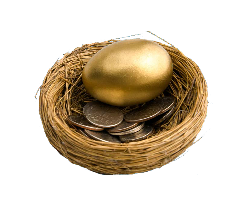 bird nest with golden egg and coins