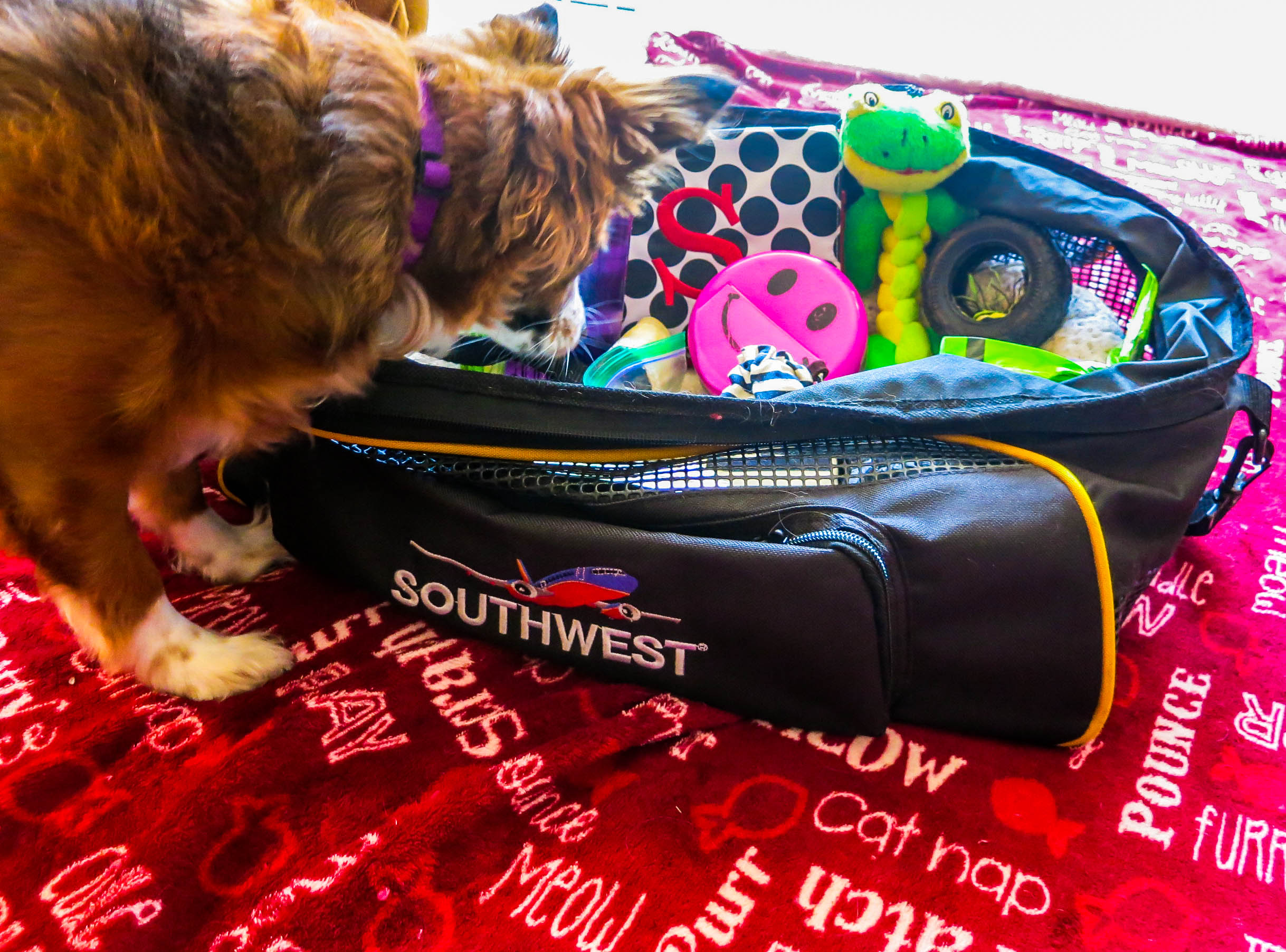 flying with dog supplies