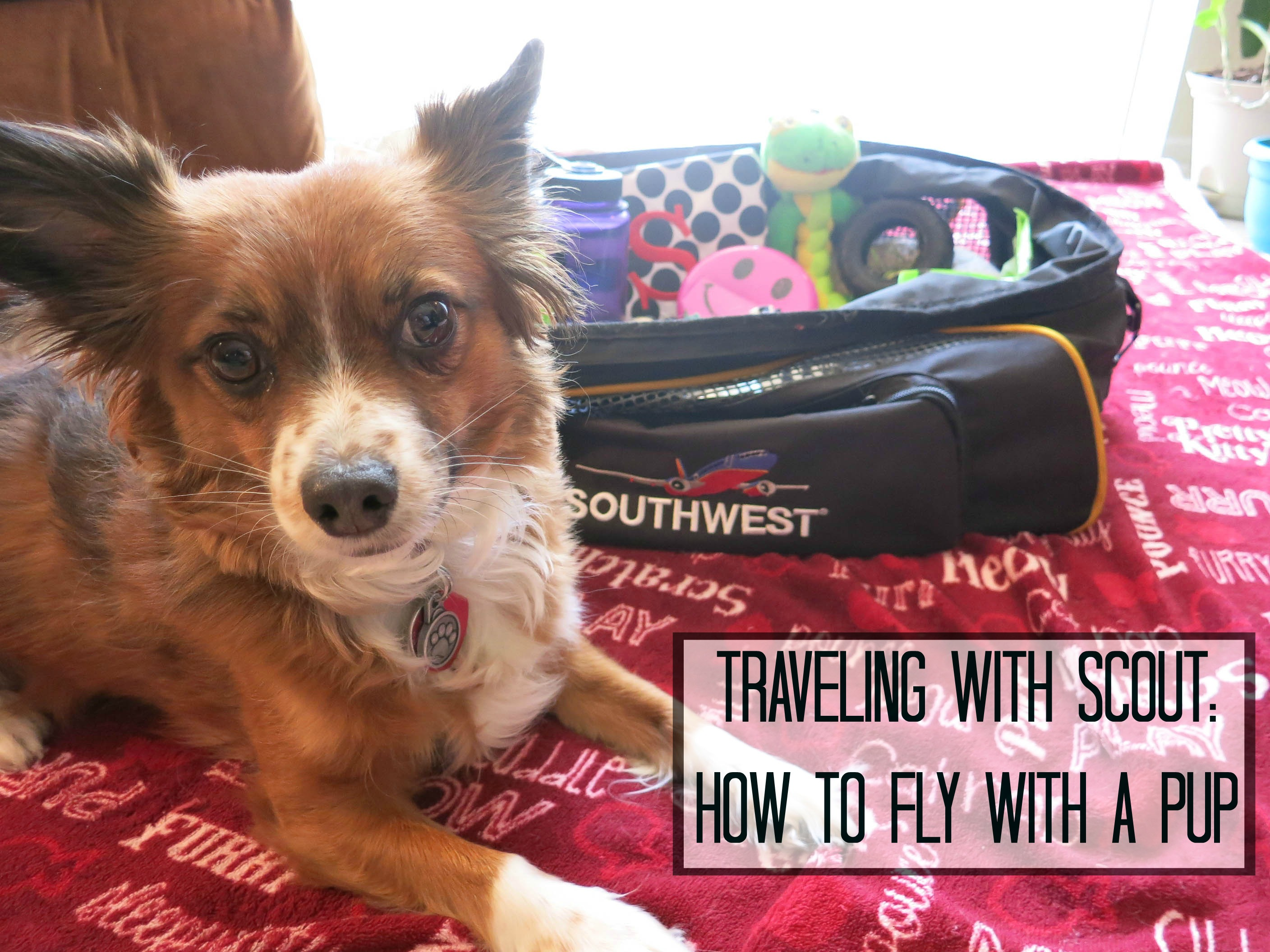 How to fly with a pet
