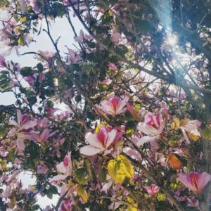 Pink flowers, spring