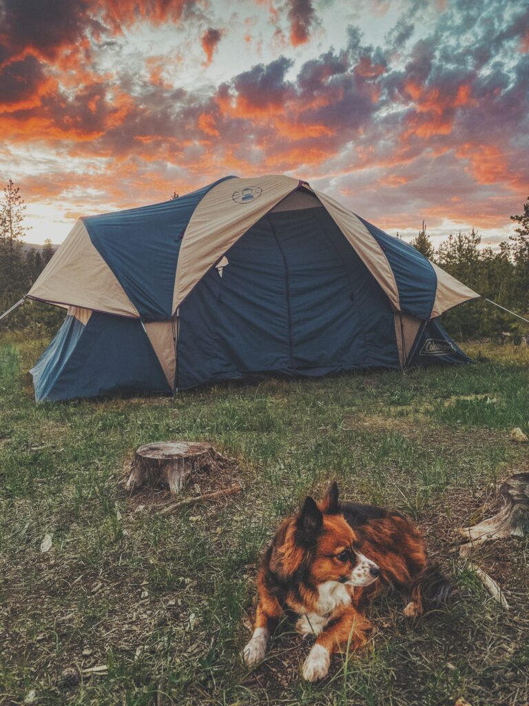 How to Go Camping With Your Dog by Scout and Bex