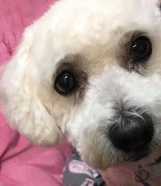 Fabulous Furr Dog Grooming