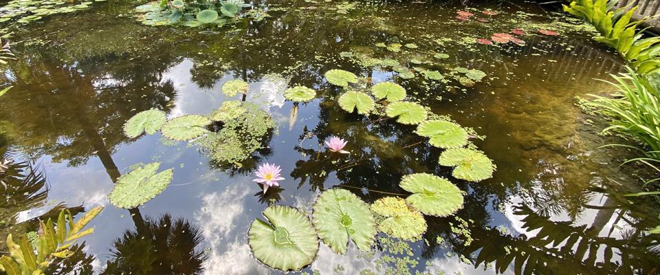 Photo Gallery: McKee Botanical Gardens