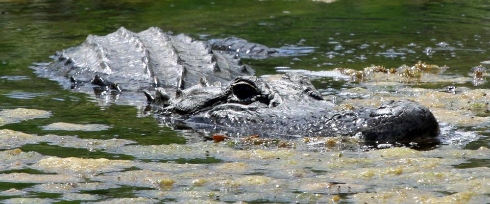 Photo Gallery: Photos from the Merritt Island National Wildlife Refuge