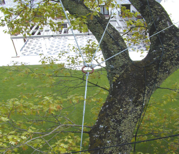 Coast Oak wind assessment, cabeling and bracing project