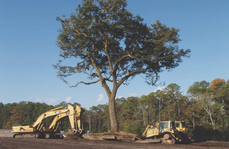 Sea Island tree relocation