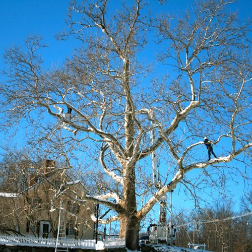 Specialized in structural pruning - Treeworks of Vermont