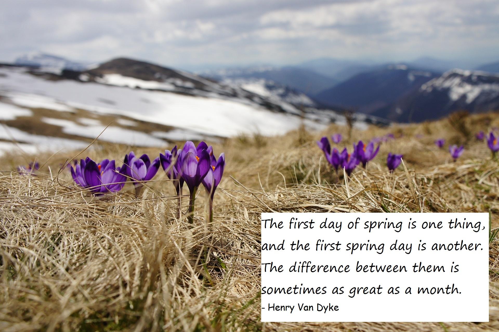 Spring #8 of 2016