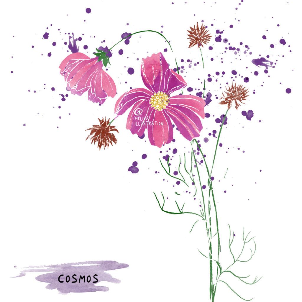 Illustration : la cosmos et ses semences