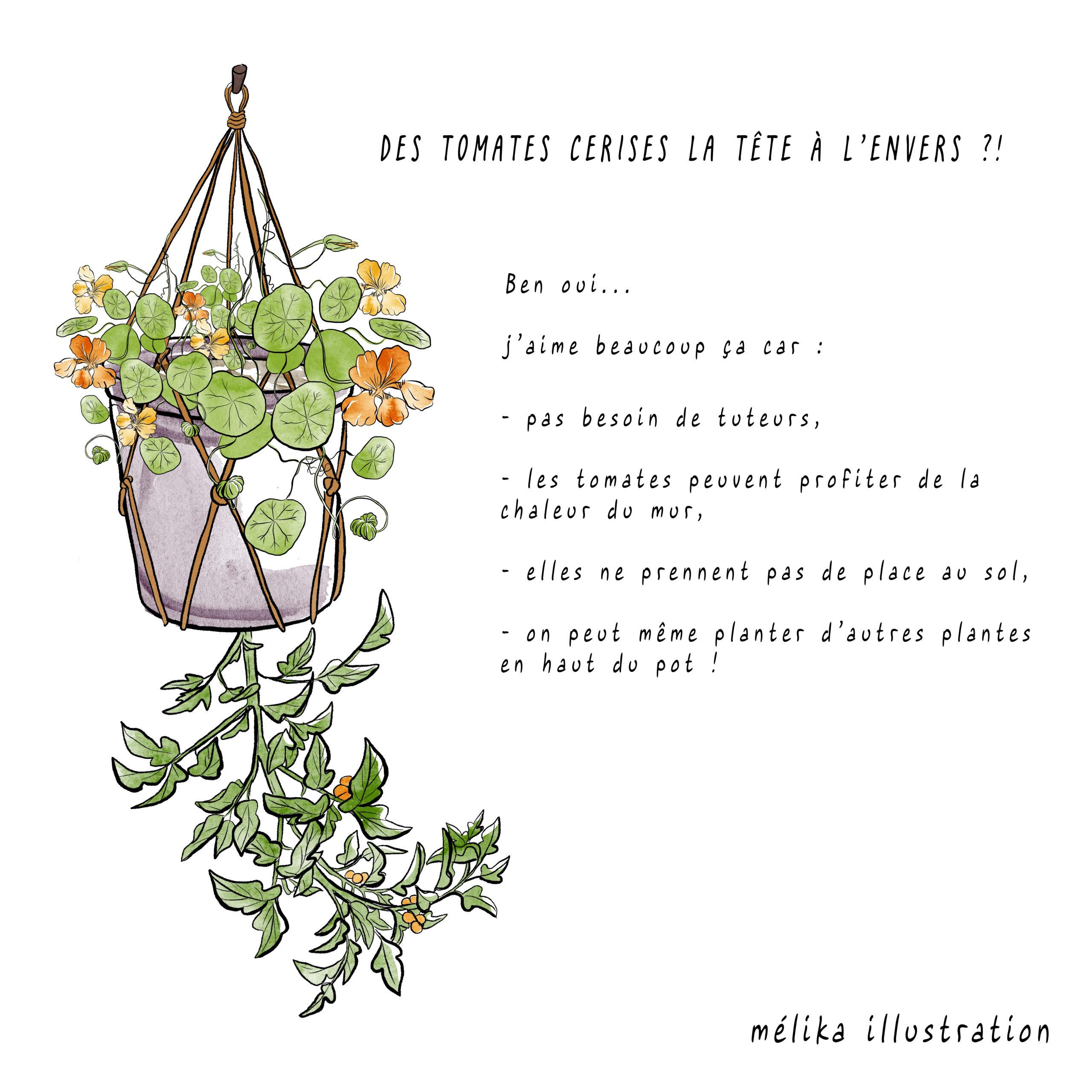 tomate suspendue-MelikaIllustration