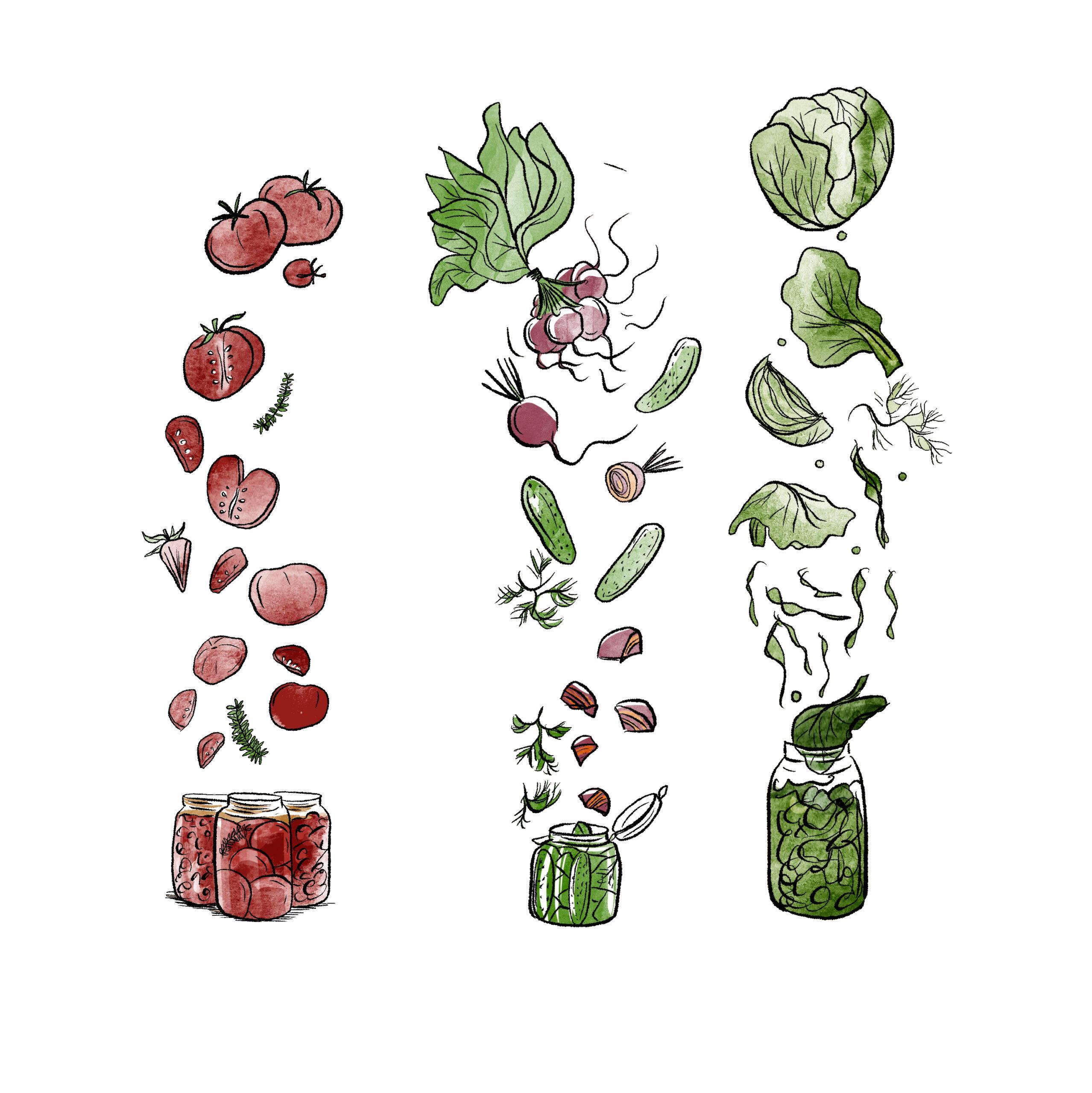 Illustration des légumes à conserver en aout