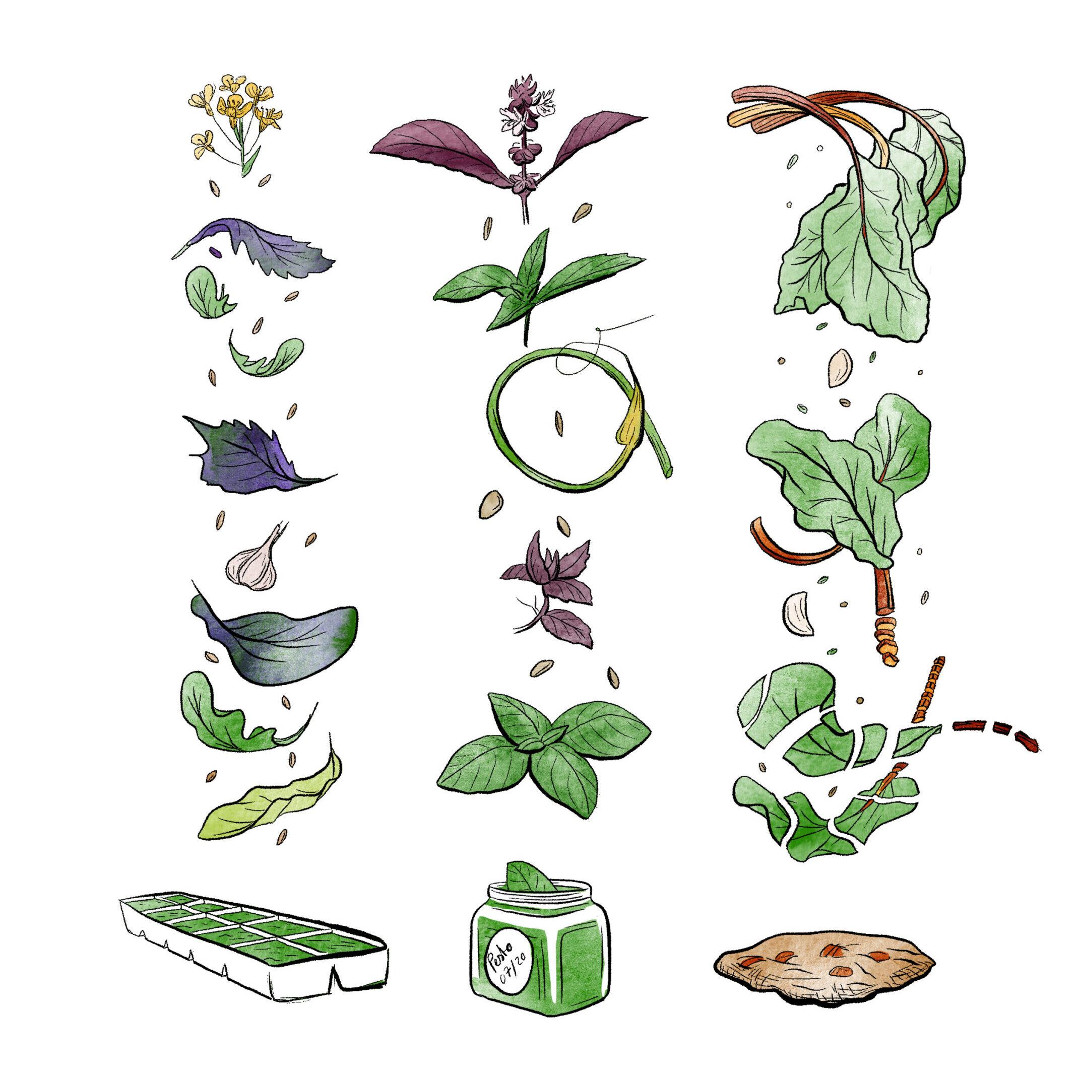 Illustration de trois types de recettes de conservation