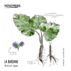 Illustration de plant de bardane et sa racine par mélika illustration