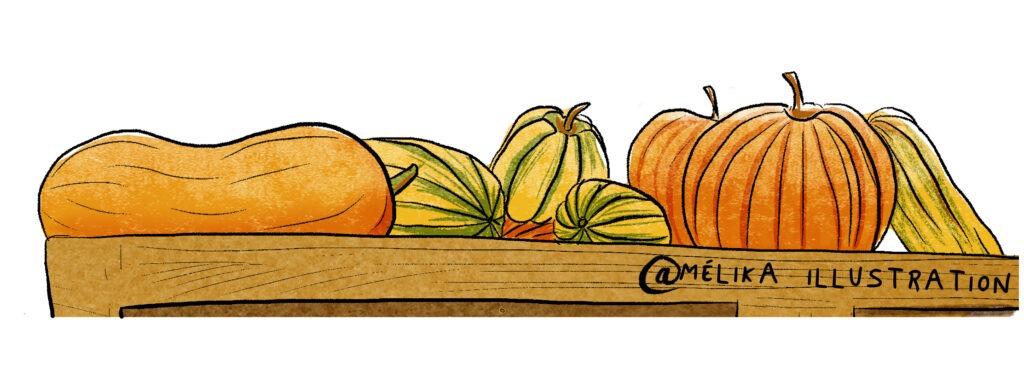 Dessins de Courges par melika illustration