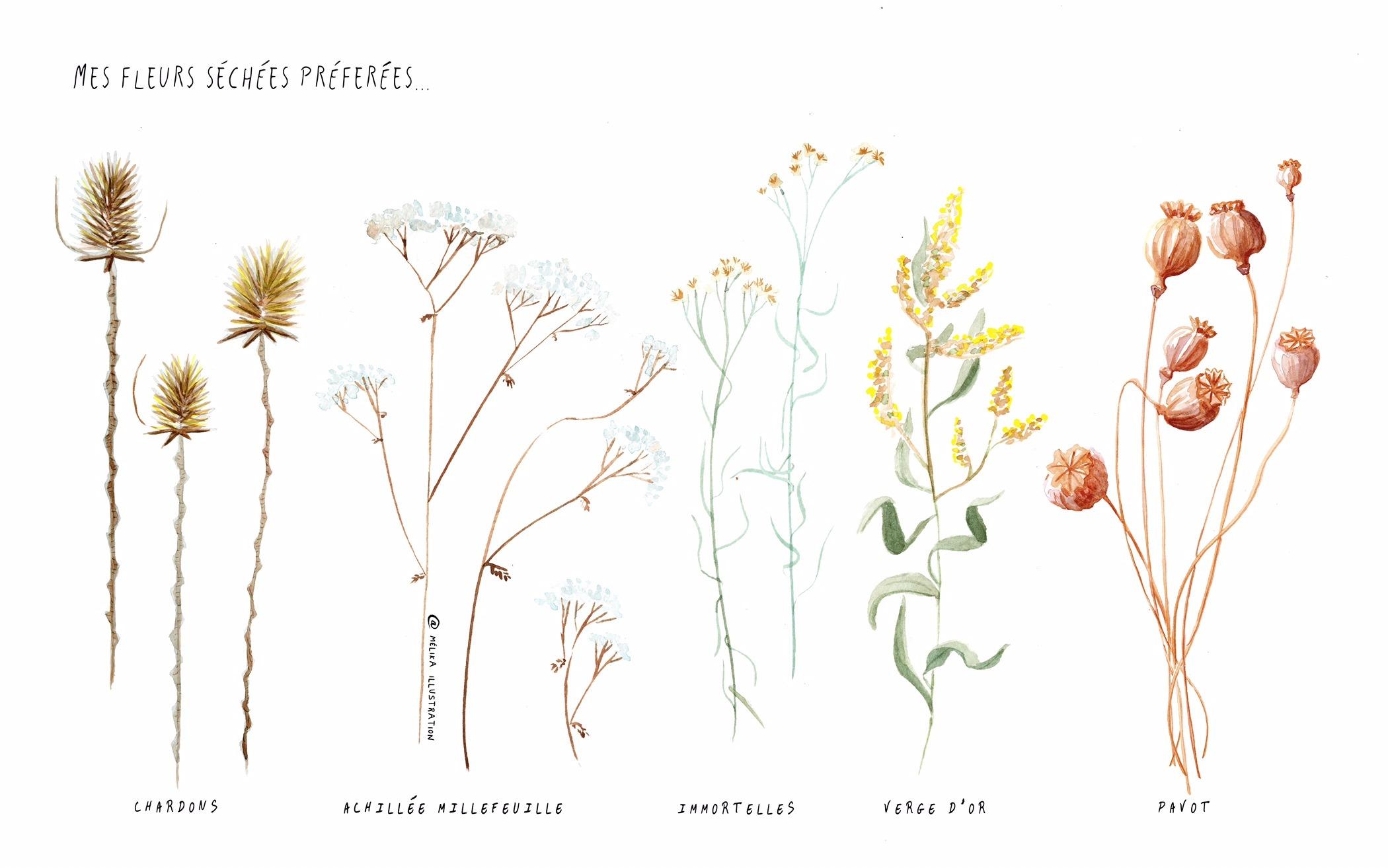Illustration de mes fleurs sechEes preferees