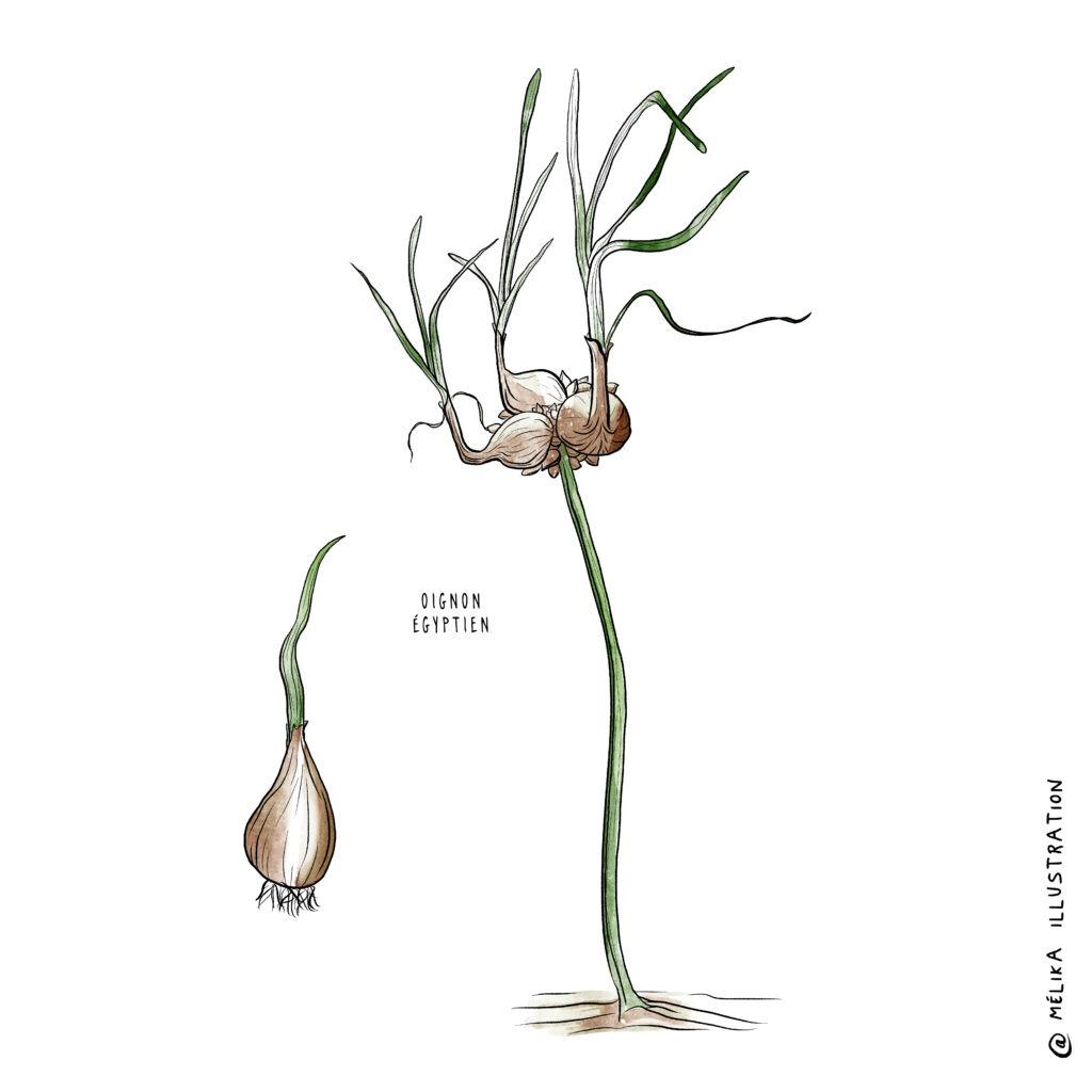 Melika illustration pour passion jardin 2020
