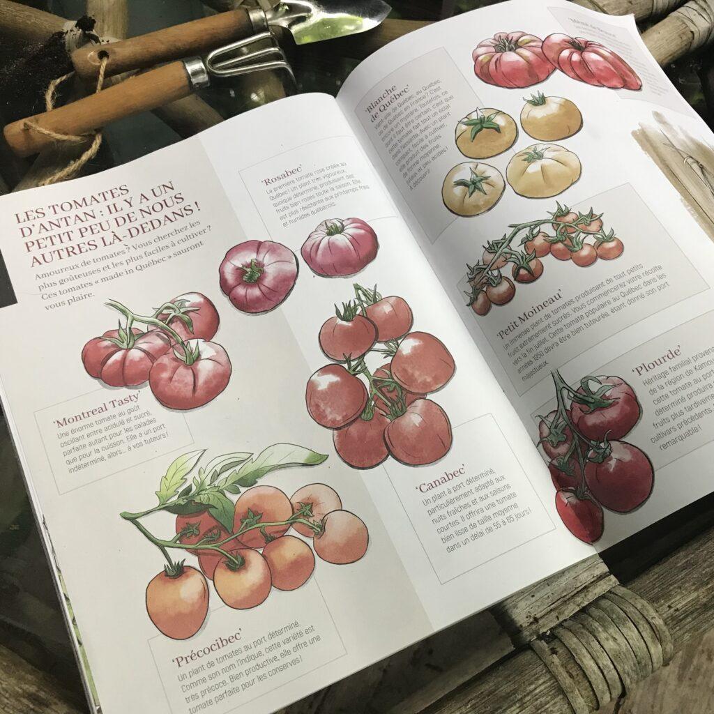 Illustration de Tomates d'antan