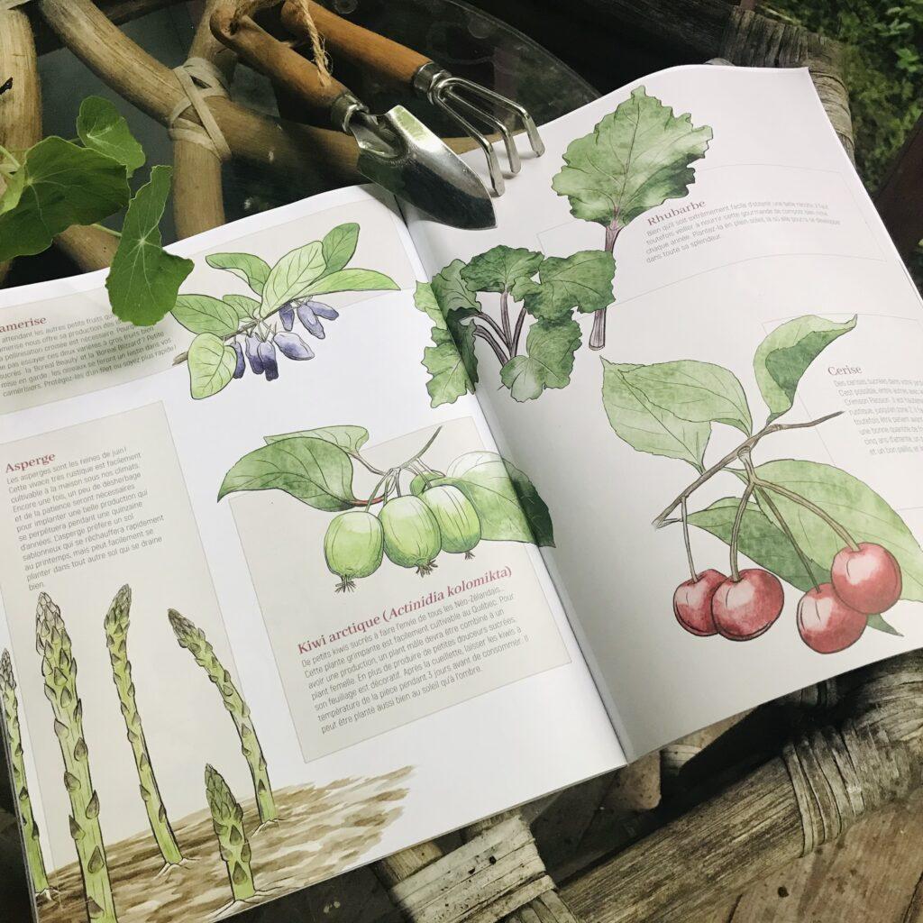 Petits fruits vivaces illustrées par Melika illustration pour passion jardin 2020