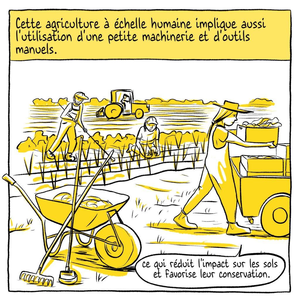 Petite agriculture BD