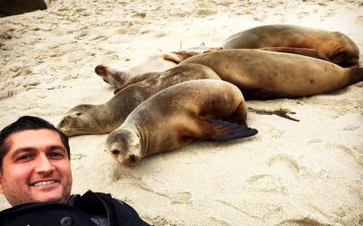 No Seal Selfies!