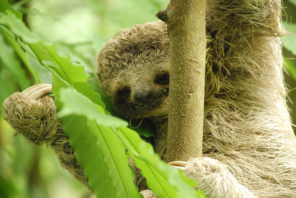 Check out the beautiful smile on this sloth!