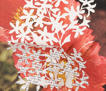 GHOSTED: Christmas Bush, 2008, hand cut paper, 34.5 x 43 x 10 cm