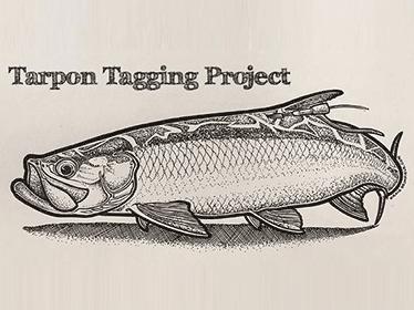 Tarpon Tagging Project