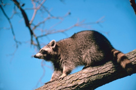 Reduce exposure to wild animals and pets that can spread rabies