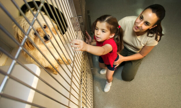 Uxbridge-Scugog animal shelter open by appointment only