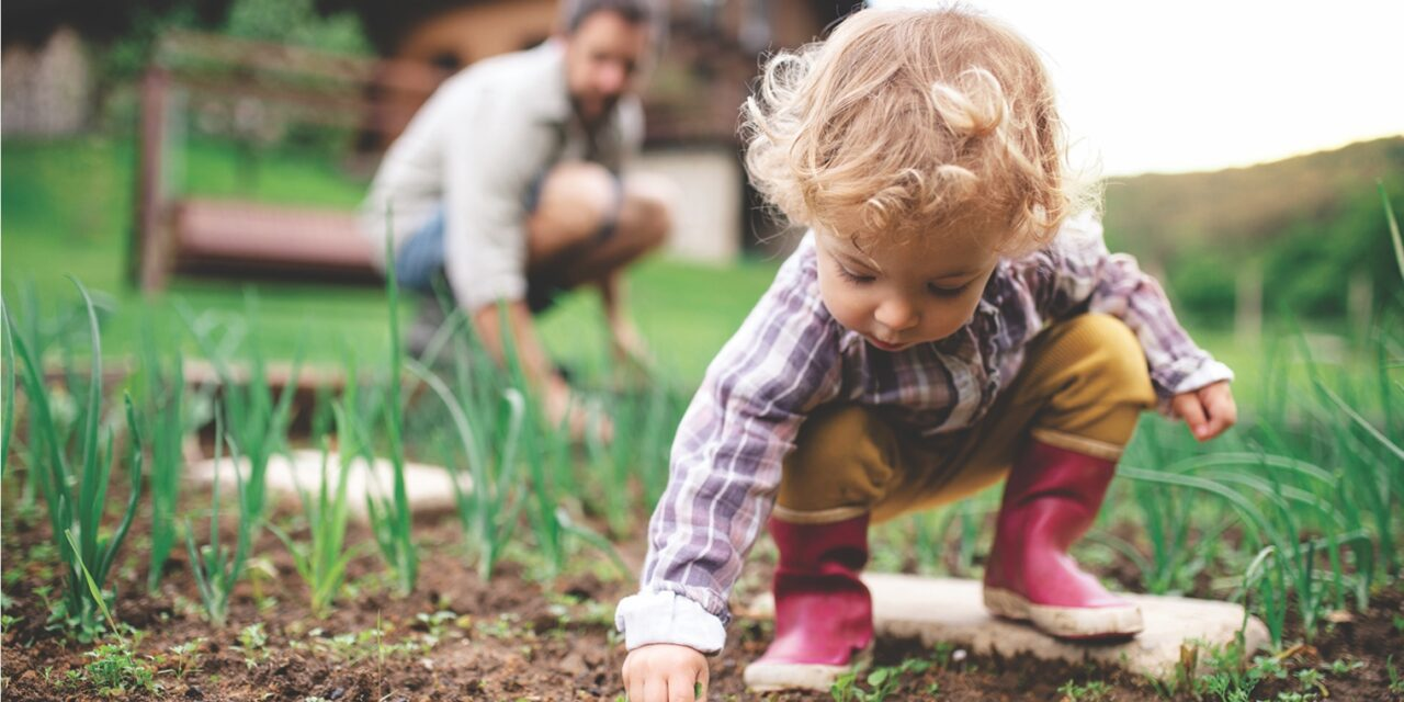How to prepare a garden for spring planting