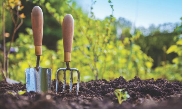 Simple ways to reduce the risk of disease in your garden