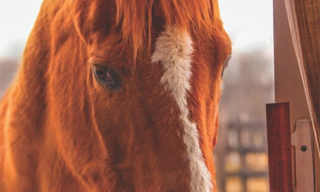 14 facts about horses