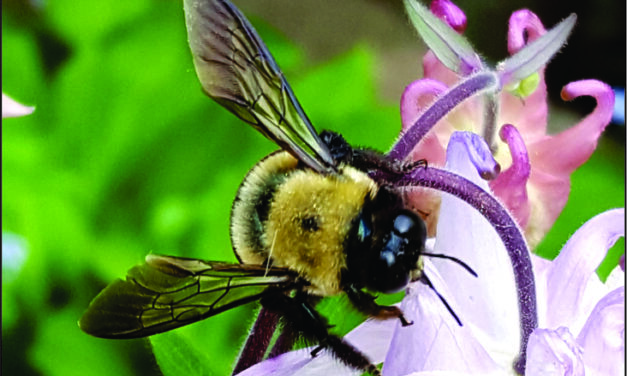 Everybody and everything is helping pollinators