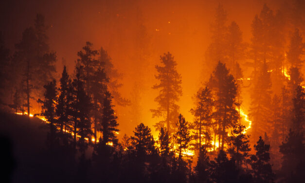 Is there a good side to forest fires?