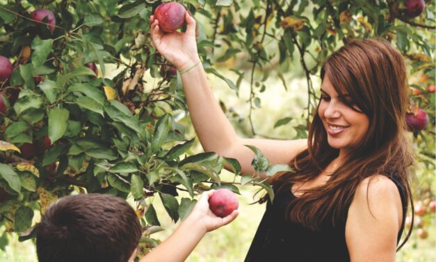 Apple Picking Tips for Families